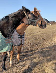 Free Horses Stock Image - 639151
