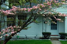 Free Country Cottage And Tree Blossom Royalty Free Stock Images - 639489