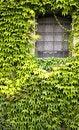 Free Window With Ivy Stock Photos - 6300593