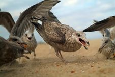 Free Super Close Seagull Stock Image - 6300161