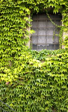 Free Window With Ivy Stock Photos - 6300593