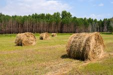 Free Field With Haystacks Stock Image - 6300911