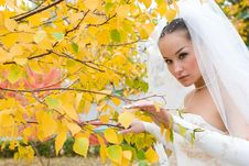 Free Bride In Autumn Royalty Free Stock Images - 6302079