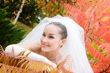 Free Wedding In Autumn Royalty Free Stock Photos - 6302118