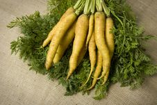 Organic Yellow Carrots Royalty Free Stock Image