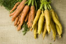 Organic Mixed Carrots Royalty Free Stock Image