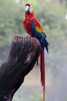 Free Splendid Parrot In The Wilderness Royalty Free Stock Images - 6302879