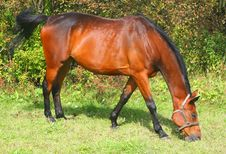 Free Brown Horse Stock Photography - 6303632
