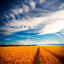 Free Dramatic View Of Wheatfields Royalty Free Stock Image - 6305126
