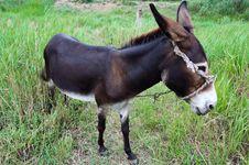Free Donkey On Rural Grassland Royalty Free Stock Image - 6305286