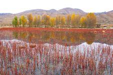 Free Autumn Royalty Free Stock Photos - 6305778