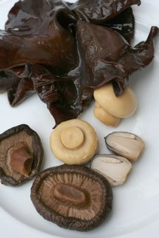 Free Mushroom Stock Photos - 6305873