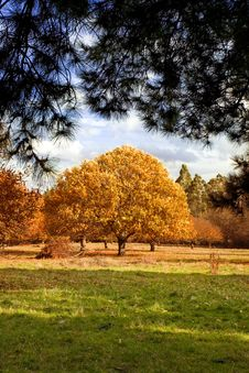 Free Autumn In The Park 2 Royalty Free Stock Image - 6306056