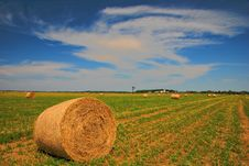 Free Round Hay Bales Royalty Free Stock Photography - 6306897