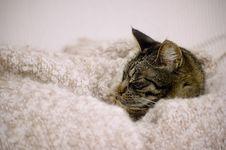 Free Sleep Royalty Free Stock Photos - 6307338