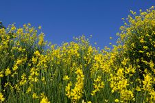 TUSCANY Countryside, Close-up Of Blooming Bush Stock Photos