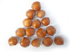 Free Hazelnuts Stock Images - 6307384