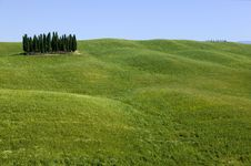 TUSCANY Countryside With Cypress Royalty Free Stock Photos