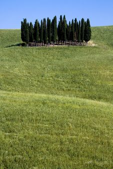 Free TUSCANY Countryside With Cypress Stock Image - 6307701