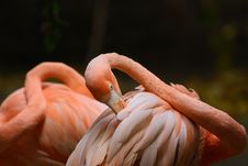 Free Flamingo Stock Photo - 6307890