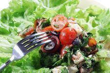 Free Salad Royalty Free Stock Photography - 6308807