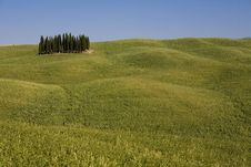 Free TUSCANY Countryside With Cypress Royalty Free Stock Images - 6308919