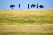 TUSCANY Countryside With Cypress Royalty Free Stock Image