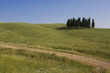 Free TUSCANY Countryside With Cypress And Road Royalty Free Stock Photos - 6308938