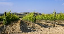 TUSCANY Countryside With Vineyards Stock Photos