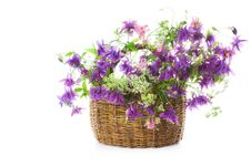Free Bellflower In A Basket Royalty Free Stock Photography - 6309187