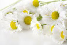 Free White Daisies Stock Photography - 6309212