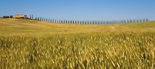 TUSCANY Countryside With Cypress And Farm Stock Photography