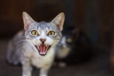 Free Cat In Discontent Stock Photography - 6309772
