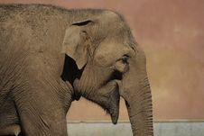 Free Elephant Royalty Free Stock Image - 6309906