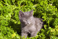 Free Playing Kitten On The Grass Stock Photo - 6319330