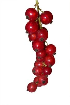 Free Red Currant Royalty Free Stock Photography - 6310507