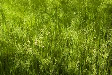 Free Green Grass Background Royalty Free Stock Photos - 6310538