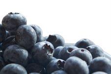 Free Fresh Bilberries Stock Image - 6310561