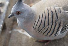 Free Macro Pigeon Stock Images - 6310904