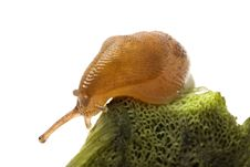 Little Snail Stock Photo