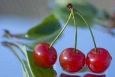 Free Three Summer Cherry Royalty Free Stock Photography - 6311637
