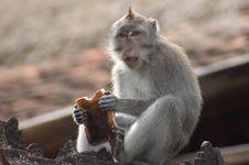 Free Monkey With Toast Royalty Free Stock Photos - 6313638