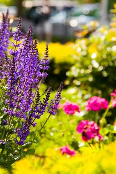 Free Pleasure Bay South Boston Royalty Free Stock Image - 6313856