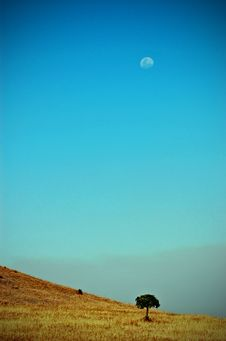 Free Tree And Moon In Sky Landscape Royalty Free Stock Photography - 6314997