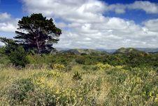 Free New Zealand Coastal Plain Landscape Stock Images - 6315394