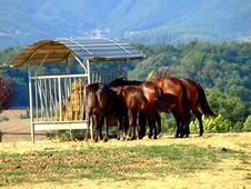 Free Eating Horses Royalty Free Stock Photo - 6315525