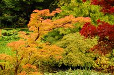 Free Autumn Colors Stock Photography - 6315682