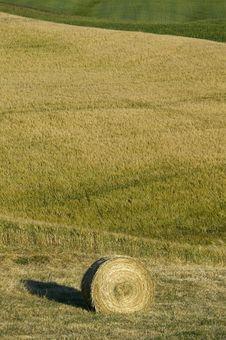 Free TUSCANY Countryside With Hay-ball Royalty Free Stock Photo - 6315725
