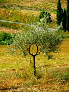 Free Vegetation In Tuscany Royalty Free Stock Photos - 6315778