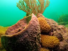 Free Coral Reef Stock Photos - 6316053